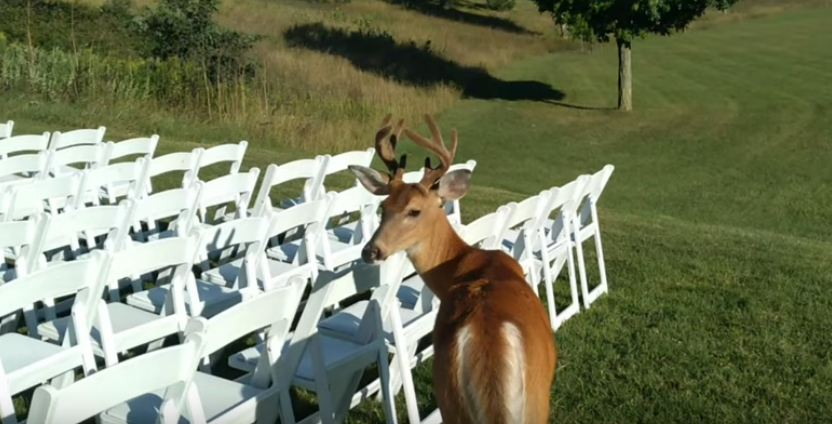 Deer-Wedding_Crasher