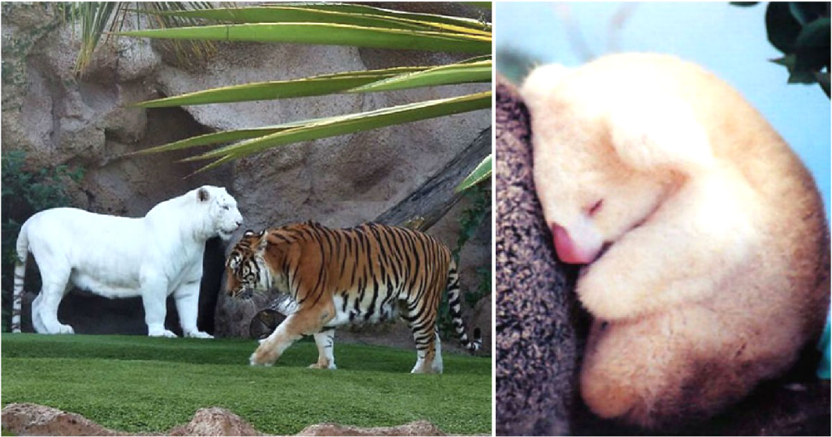 50 Rare Albino Animals That Are Beautiful To See
