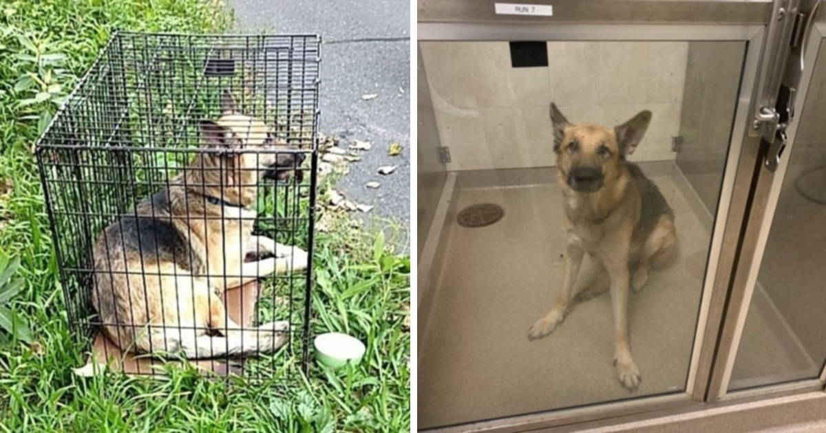 Police Seek Information In The Case Of Abandoned Dog
