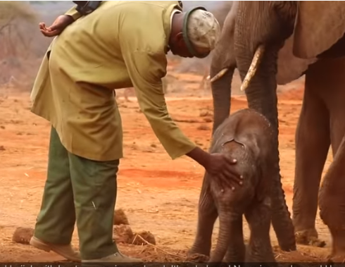 Baby_Elephant_And_Keeper