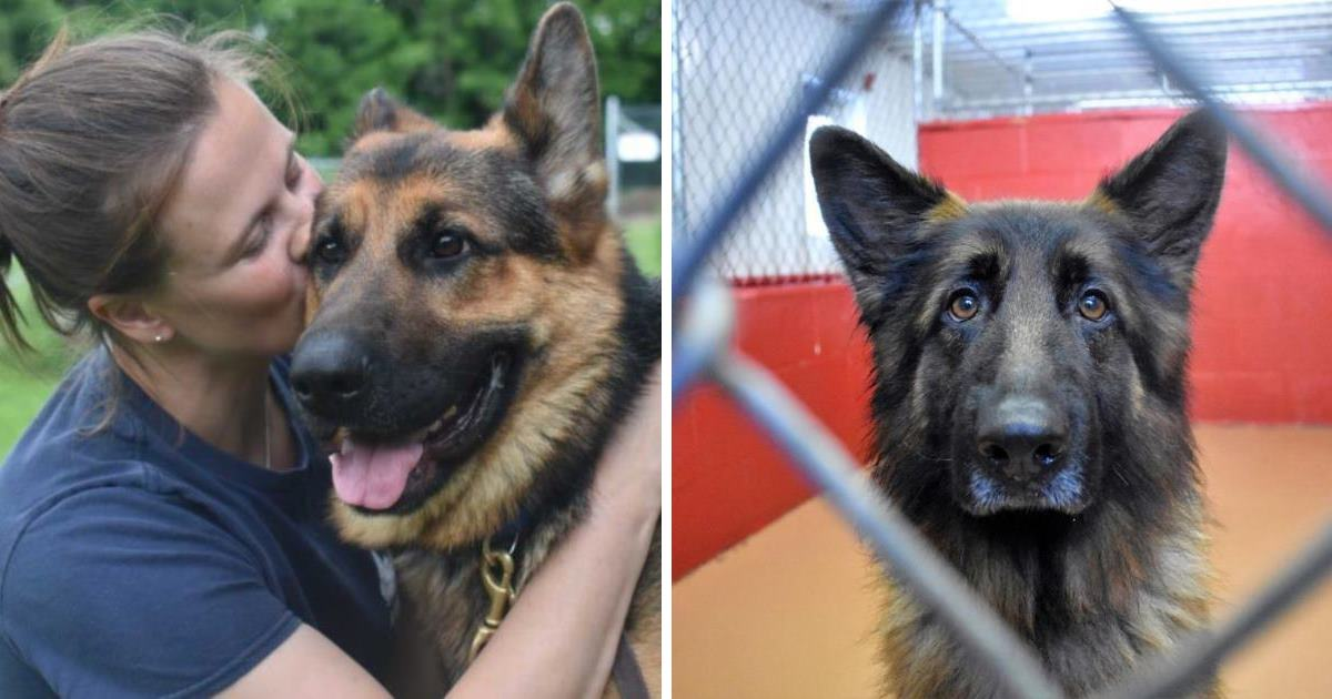 Dogs Seized In Court Case Up For Adoption