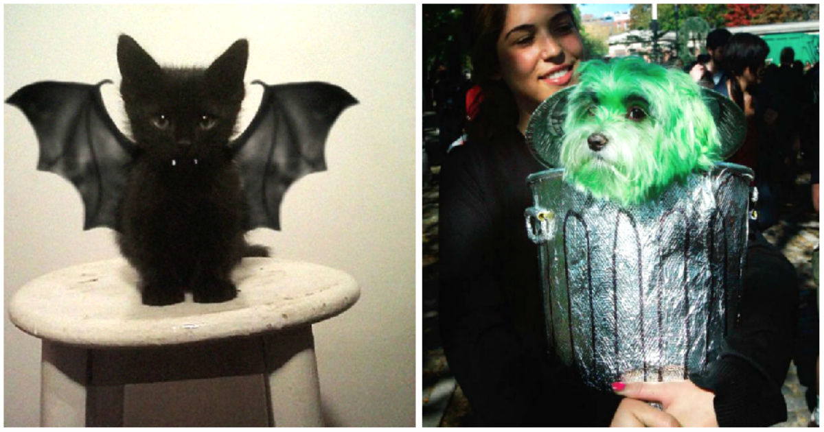 75 Of The Hands Down Best Halloween Costumes For Pets