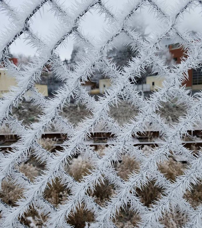 Frost_On_Fence