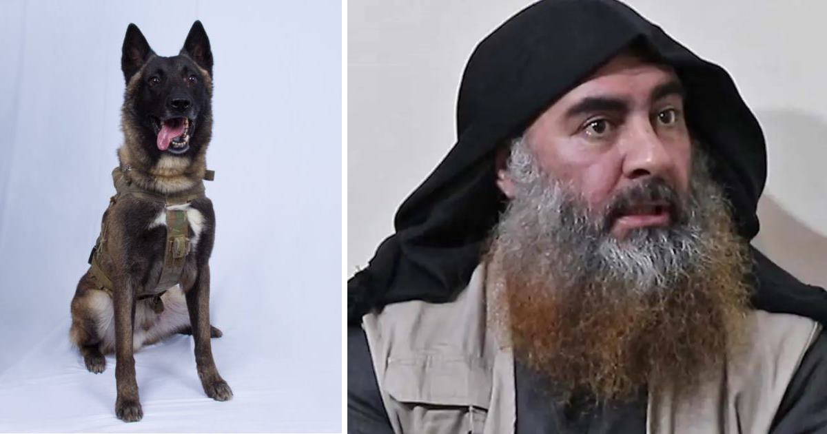 Female Military Dog Helps Take Down The Founder And Leader Of ISIS