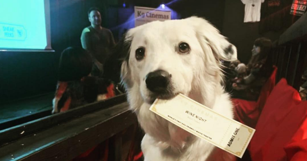 Texas Movie Theater Lets Guests Bring Up To 2 Dogs And Offers Bottomless Wine