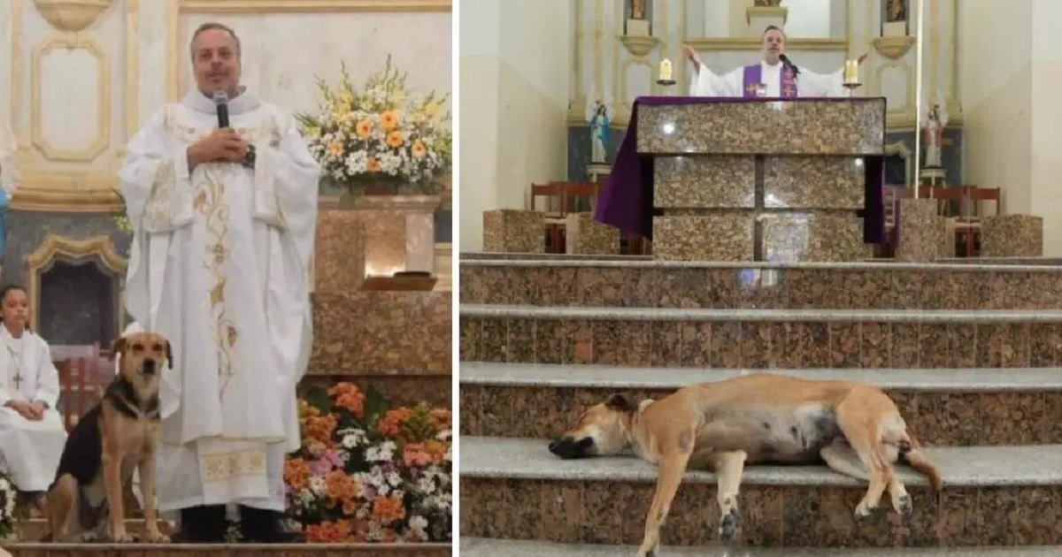 Priest brings stray dogs to mass to help them find forever homes