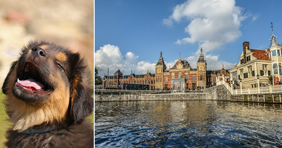 Holland declared first country without street dogs after implementing a small, simple change