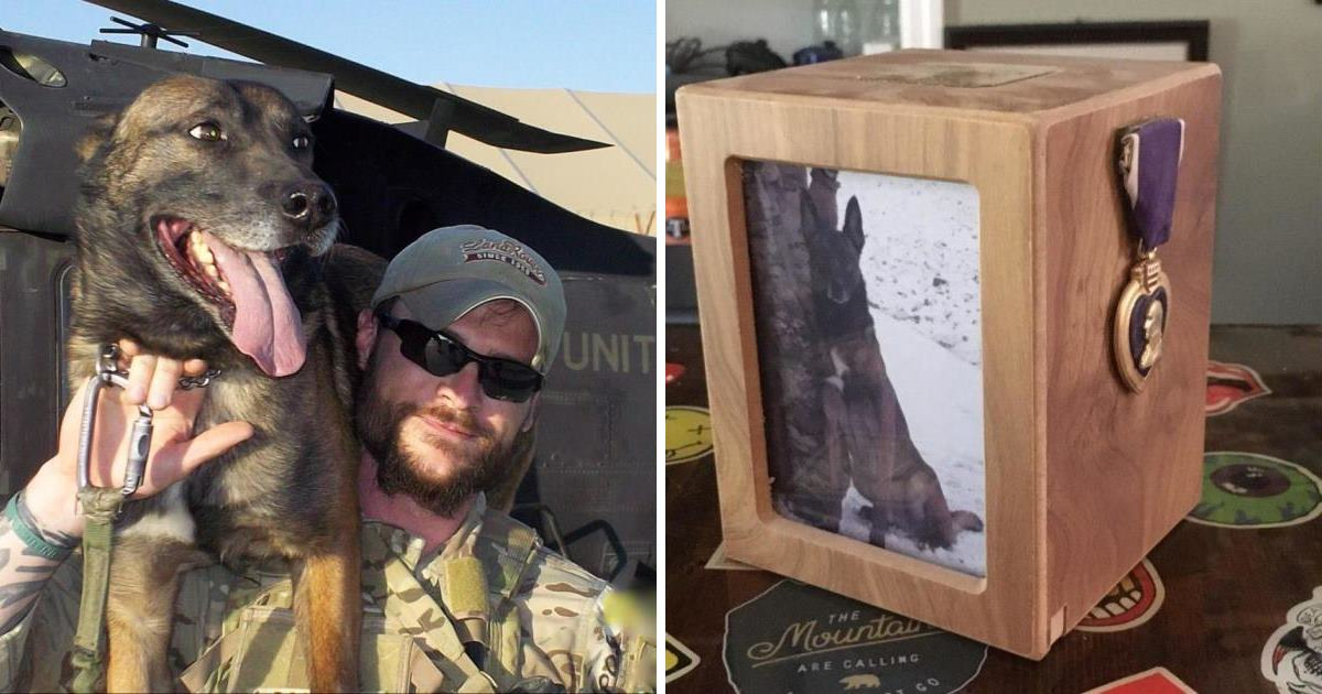 Special operations military dog Weblo takes final flight before getting a hero's goodbye