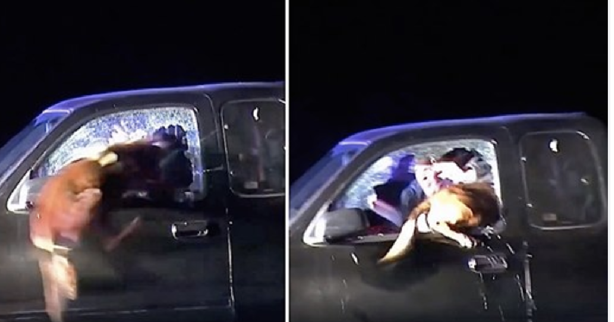 Man Refuses To Get Out After High-Speed Highway Chase – Then Police Dog Flies Through Car Window