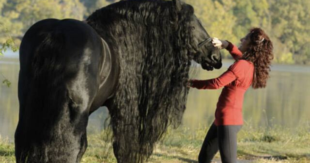 People Can T Seem To Get Enough Of Frederik The World S Most Beautiful Horse