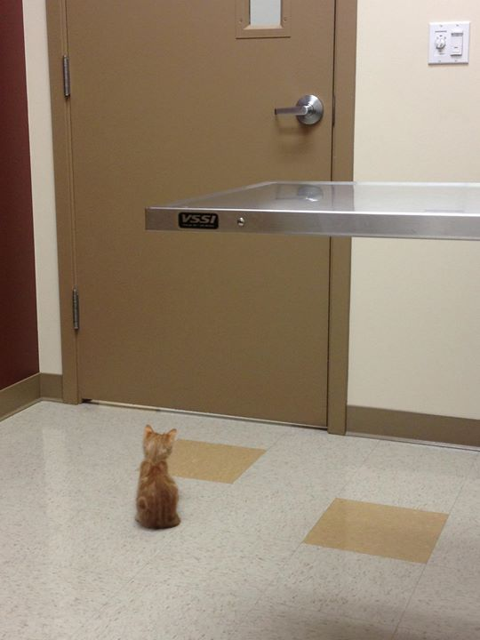 https://www.reddit.com/r/aww/comments/1x9v23/waiting_for_the_vet/