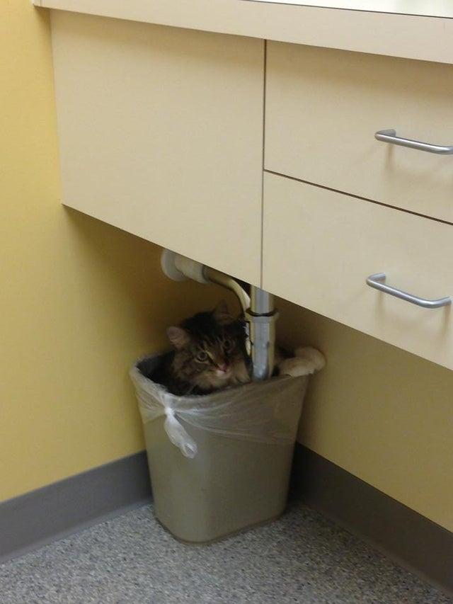 https://www.reddit.com/r/funny/comments/1hl9xe/my_cat_was_afraid_of_the_vet_so_he_hid/
