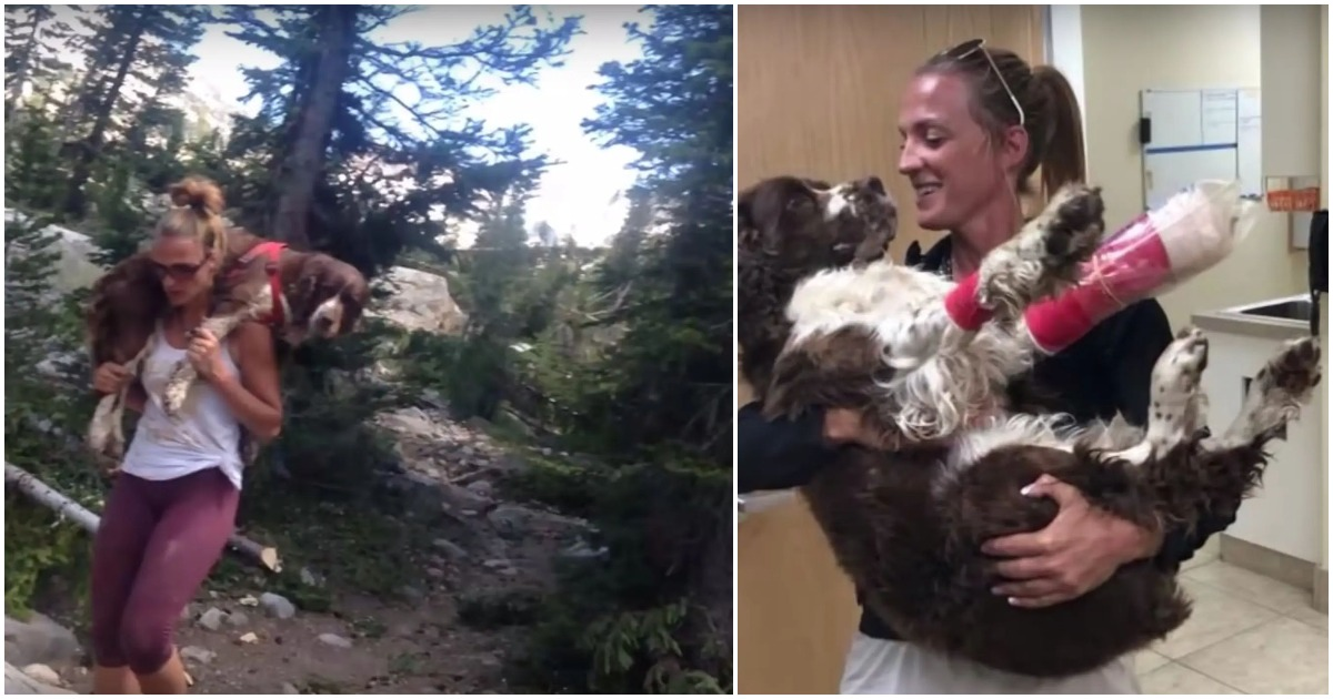 Woman saves injured 55-pound dog's life by carrying him on her shoulders to safety for 6 hours