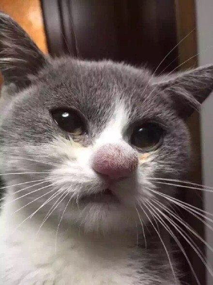 https://www.reddit.com/r/pics/comments/3ucnu8/cats_nose_after_losing_a_battle_with_a_bee/