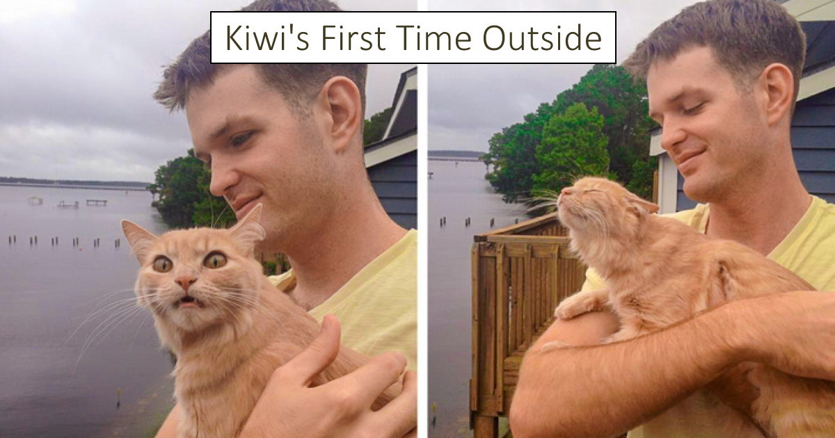 75 animals doing things for the first time with the funniest result