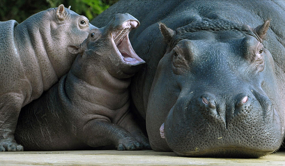10+ baby animals driving their mom crazy but overwhelming us with cuteness