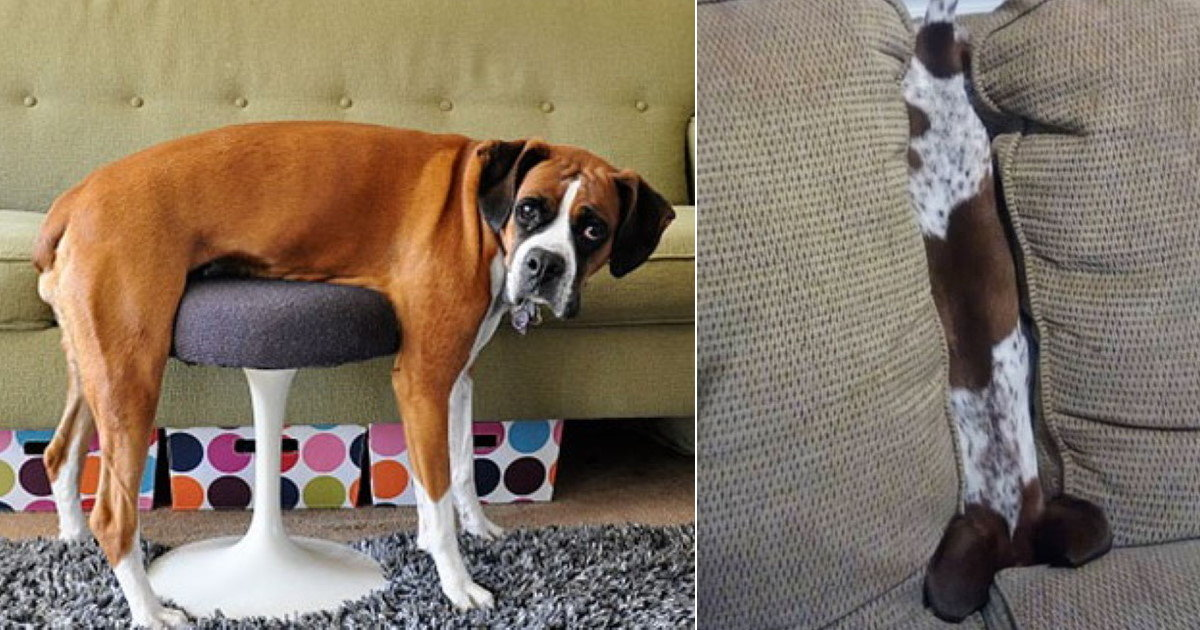 60 Dogs And Cats Who Got Themselves Hilariously Stuck