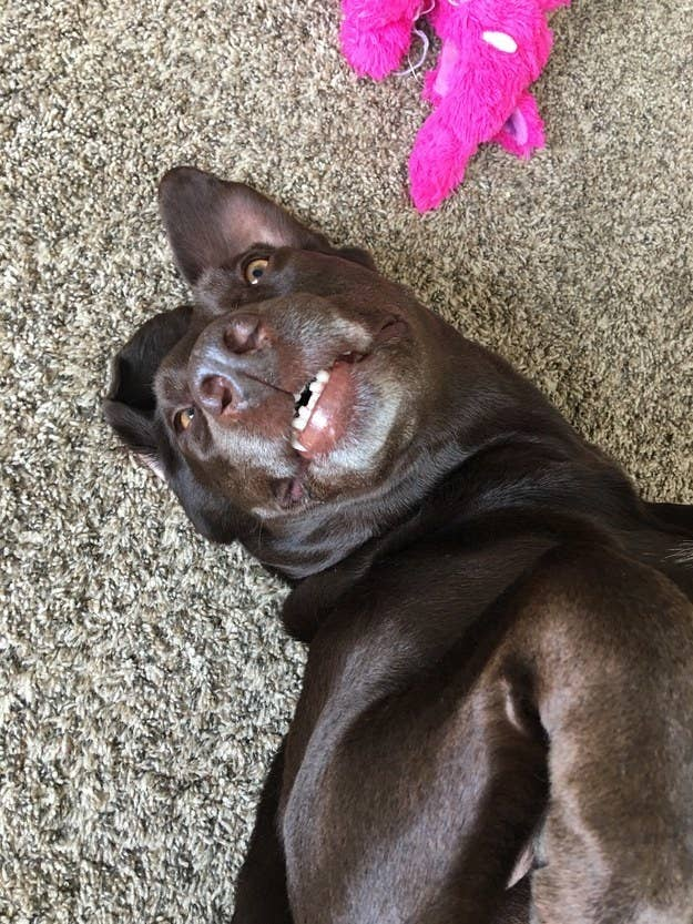 https://www.buzzfeed.com/lyapalater/sets-of-teefsies-that-will-make-your-day-better-i