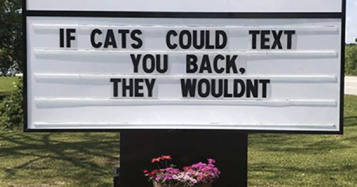 50 spot-on cat jokes put up on signs outside veterinary clinics