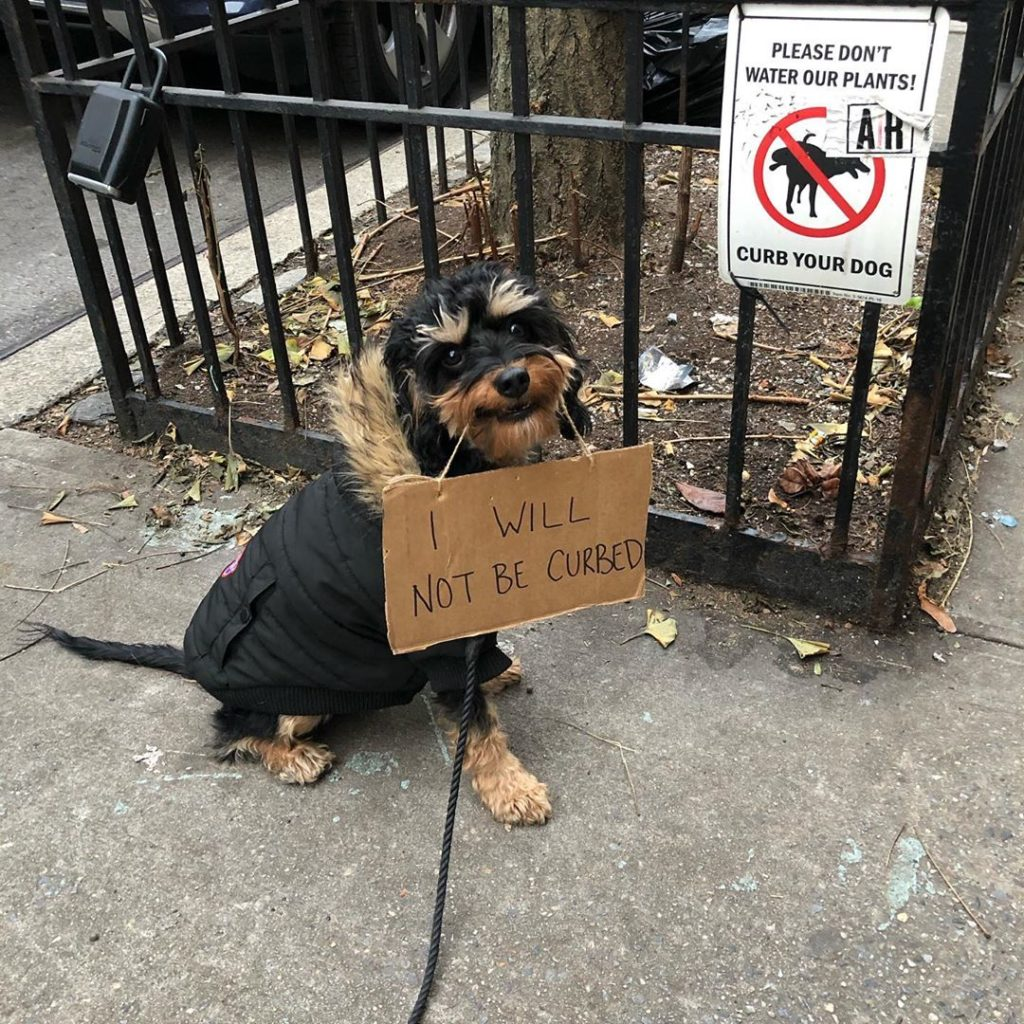 Dog fed up with everyday injustices – sits on the street with protest signs