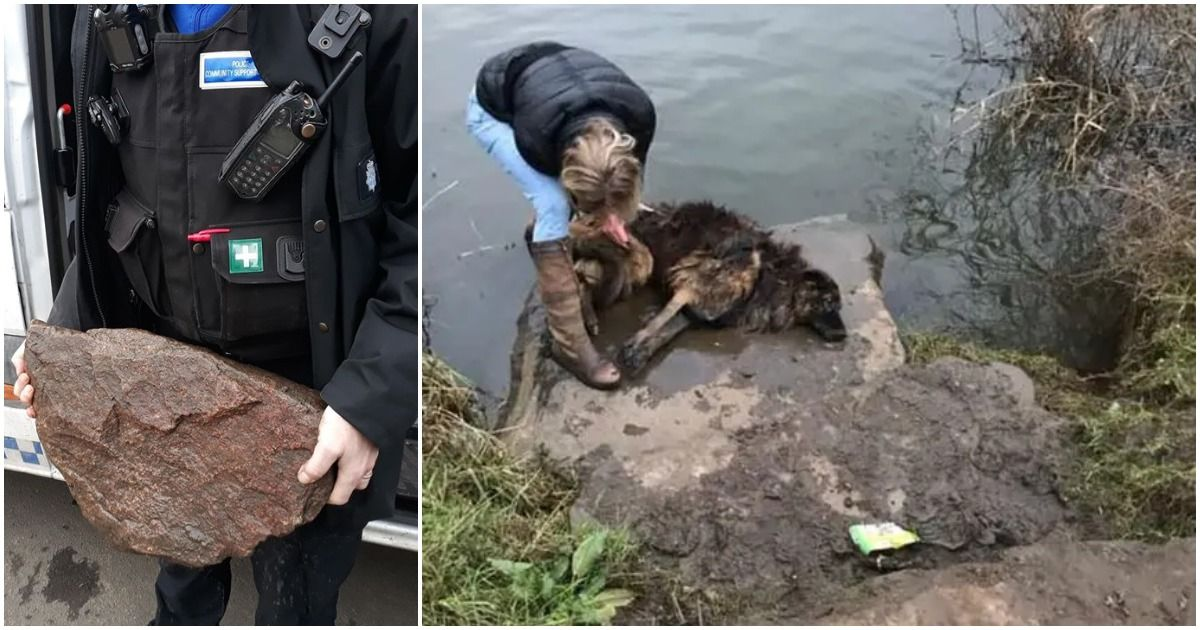 Woman rescues drowning dog in the water only to notice its leash was tied to a giant rock