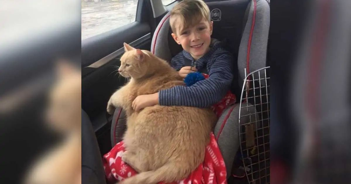 Little boy goes to shelter to get a new pet – picks the cat no one thought would get adopted