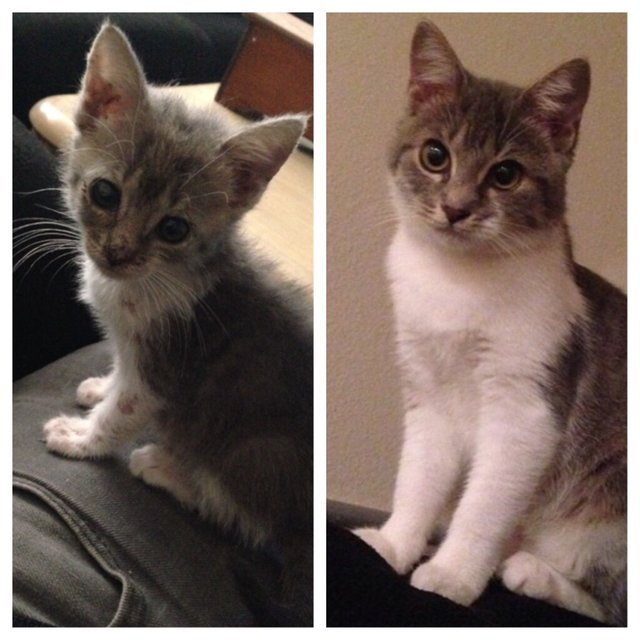 https://www.reddit.com/r/BeforeNAfterAdoption/comments/2rkw9f/stray_kitty_kuka_before_after/