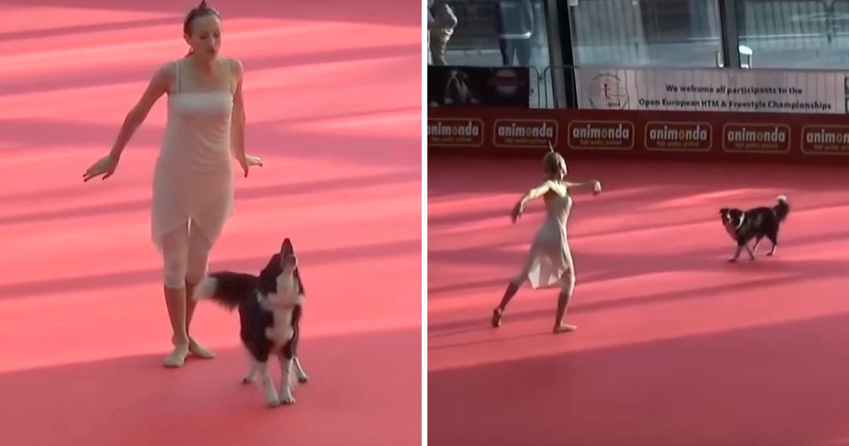 Woman And Dog Thrill Audience With Emotional Dance Earning Over 10m Views