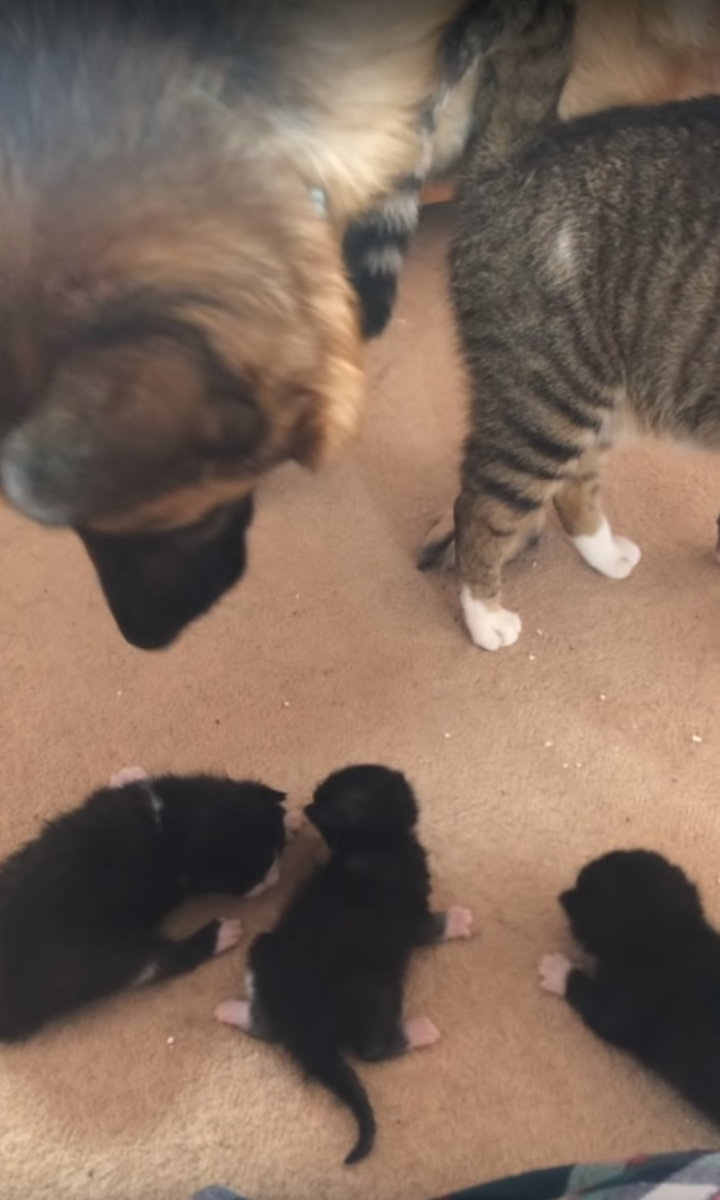 Image 1 Dog Scared Of 2 Week Old Kitten
