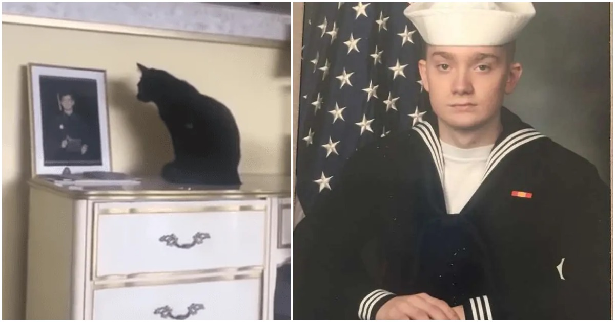 Sad cat won't budge from photo of deployed owner – man's mother realizes it's grieving