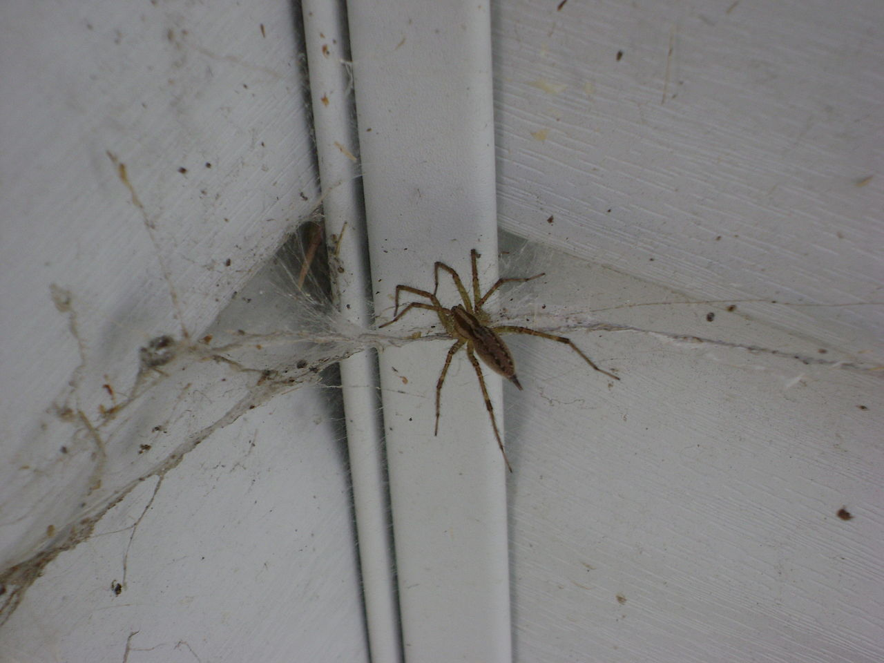 https://commons.wikimedia.org/wiki/File:Spider_in_corner.jpg