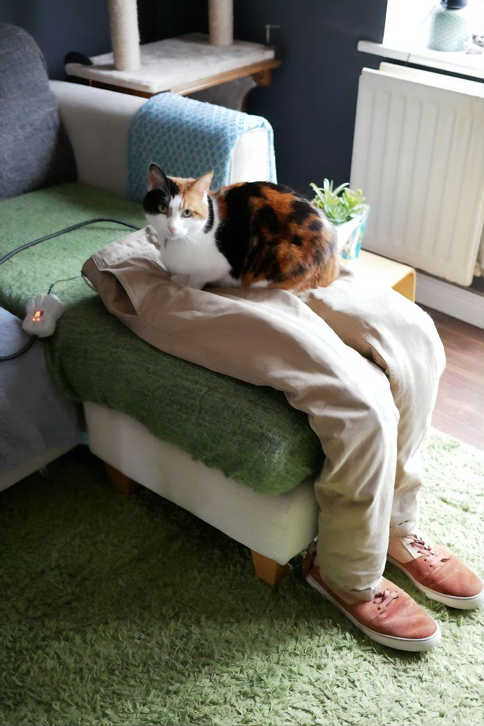 https://www.boredpanda.com/couple-trick-clingy-lap-cat-by-making-fake-lap/