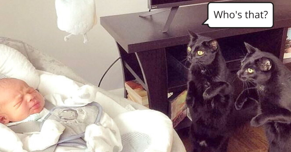 50 Photos Of Cats Being Really Silly