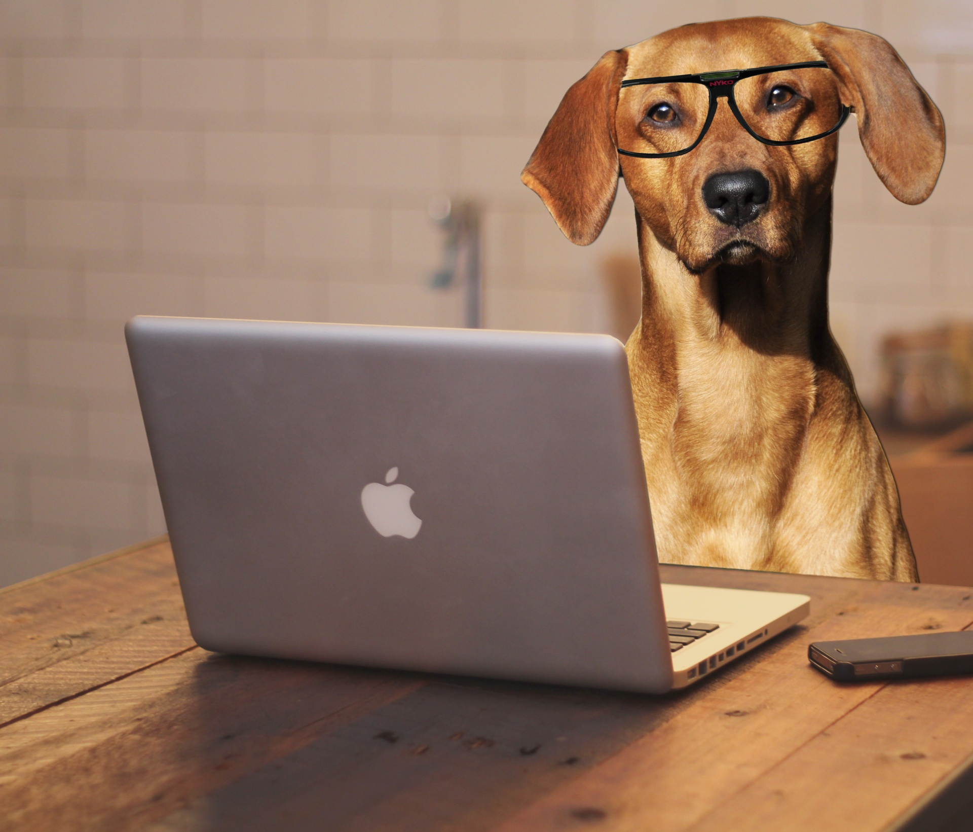 https://www.publicdomainpictures.net/en/view-image.php?image=174322&picture=dog-using-laptop-computer
