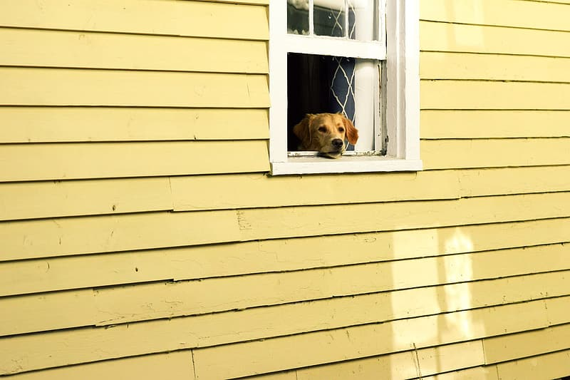 https://www.pikrepo.com/fulgj/brown-short-coated-dog-on-window