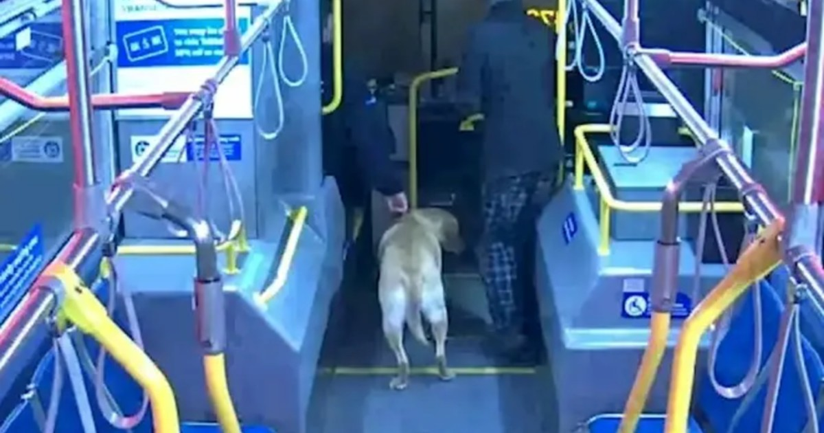 Bus driver recognizes missing dog and refuses to let him off with strange man