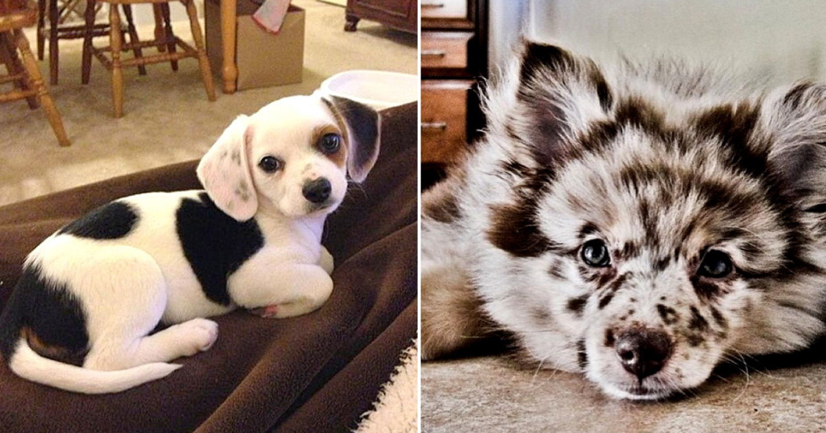 50 Crossbreed Dogs That Are Completely Adorable
