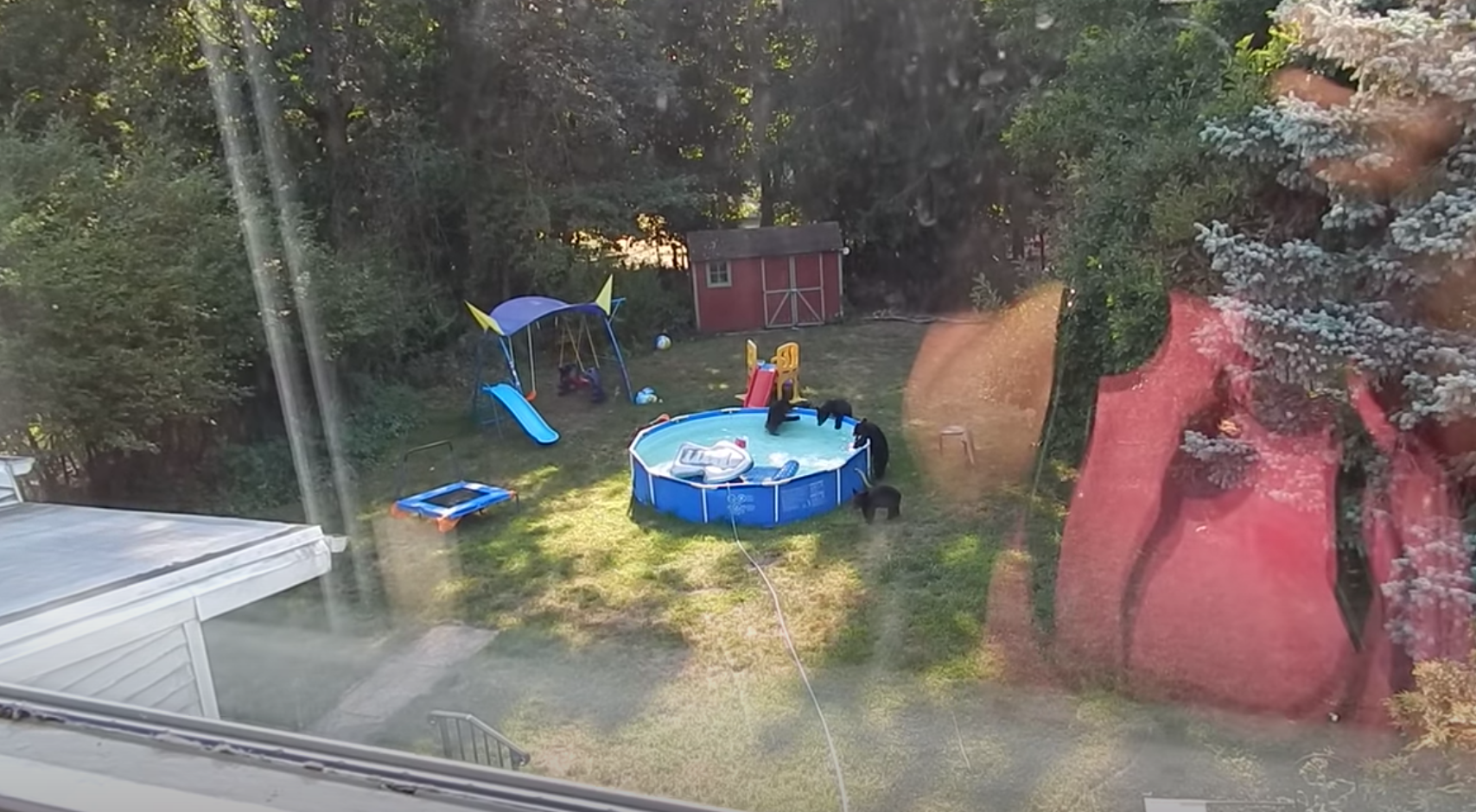 Momma bear and cubs caught having a backyard pool party