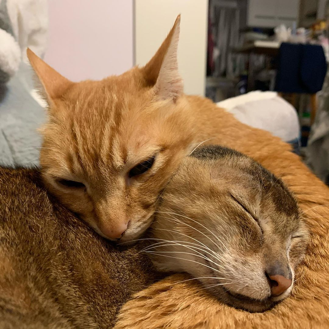Cat without ears left all alone meets best friend and finds his forever family