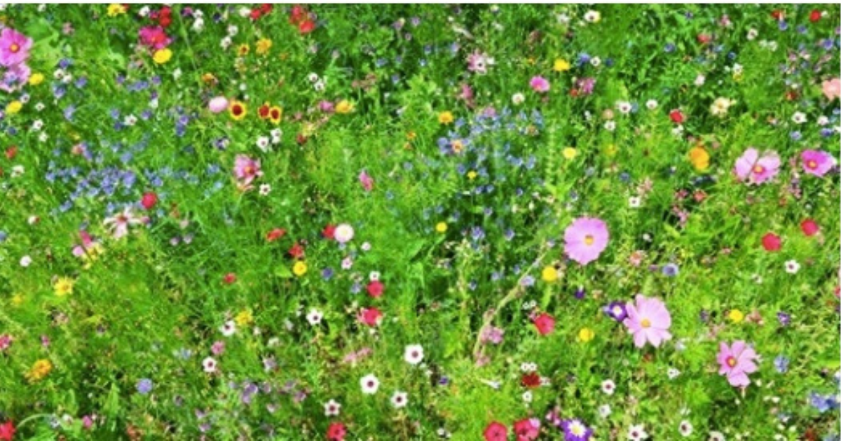 No Mow May' campaign asking us to leave the lawn alone until June to help  save bees