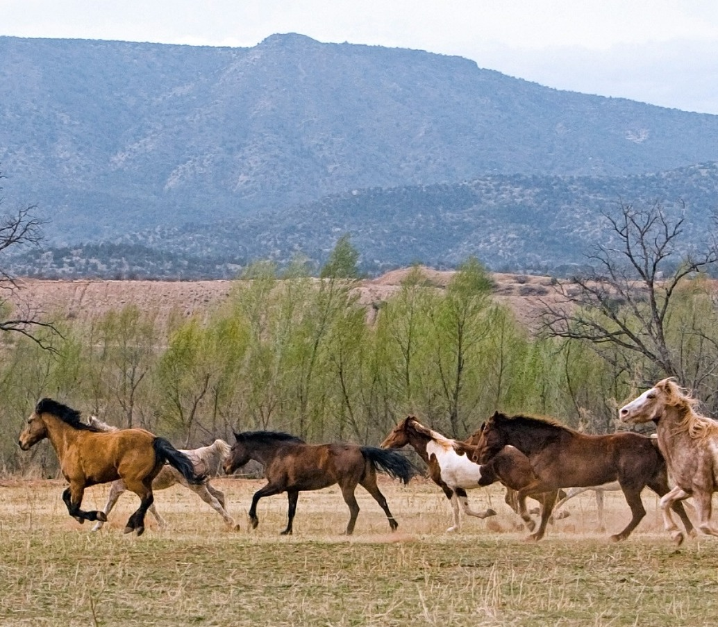https://pixabay.com/photos/horse-equine-herd-stallion-ranch-419738/