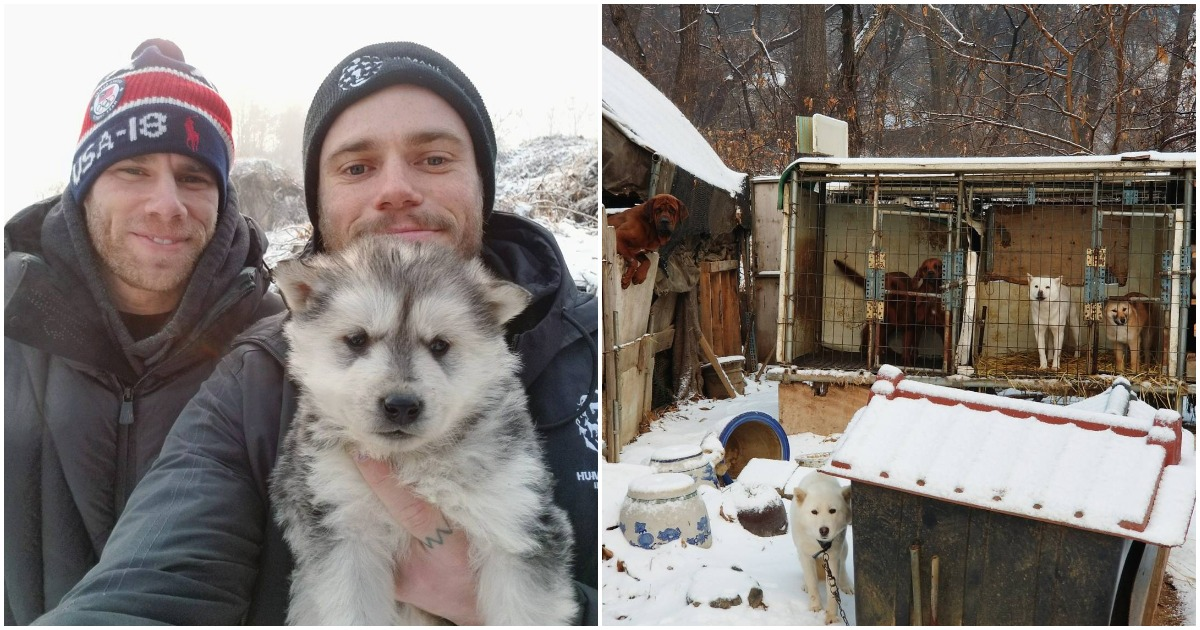 Olympic Skier Helps Save 90 Dogs From A Korean Meat Farm