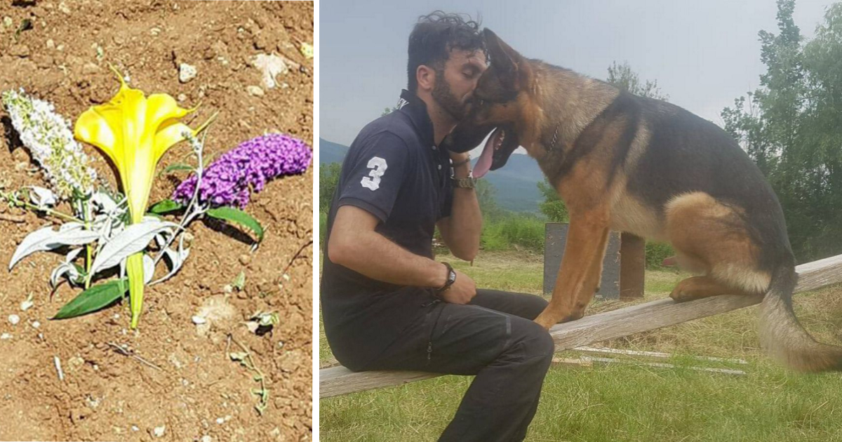 German shepherd heroically saves hundreds of earthquake victims only to be poisoned to death