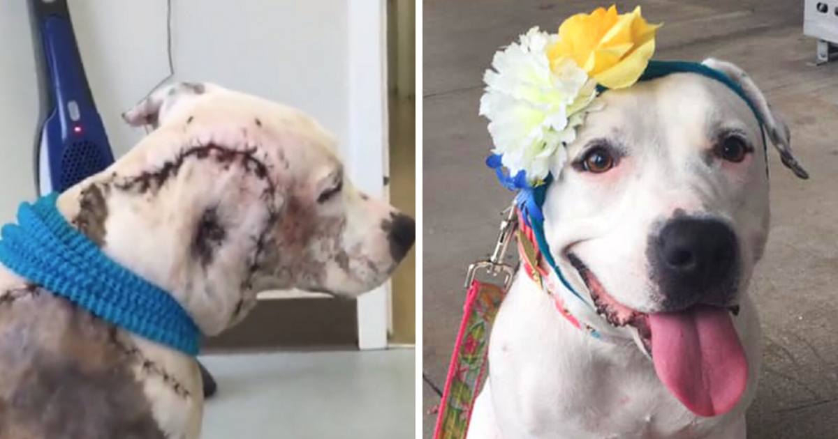 Vets call bait dog who lost entire part of face 'worst case ever' – but look at her now