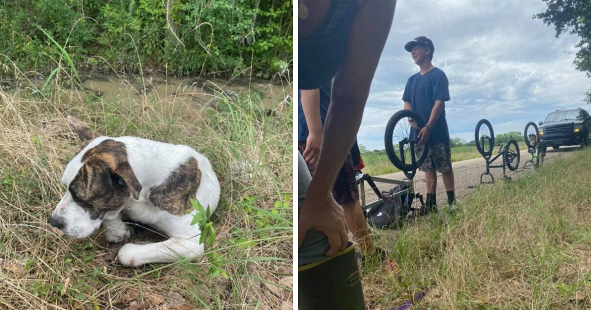 Three Teenagers Find Motionless Dog On The Side Of The Road
