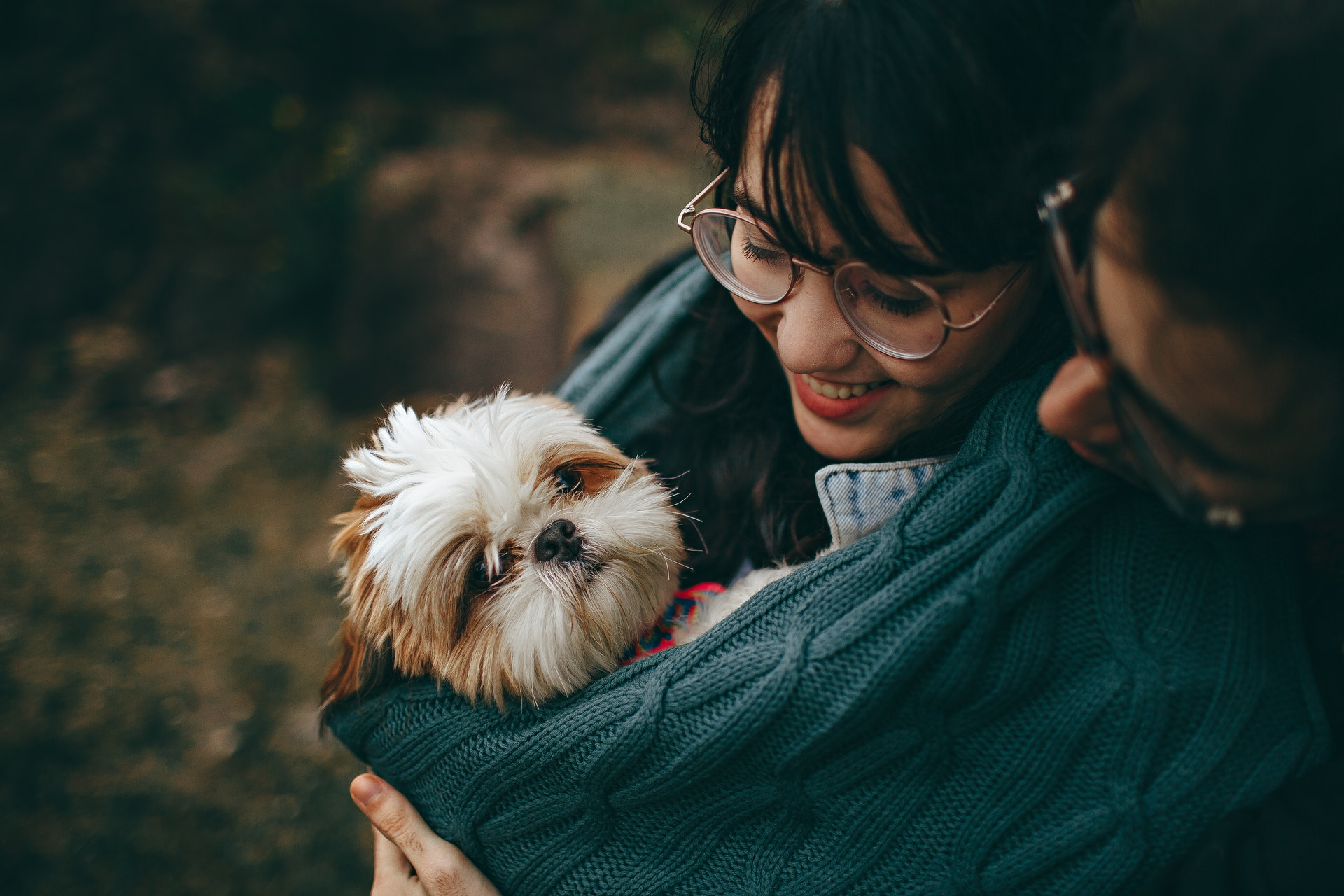 https://www.pexels.com/photo/selective-focus-photography-of-white-and-tan-shih-tzu-puppy-carrying-by-smiling-woman-1378849/
