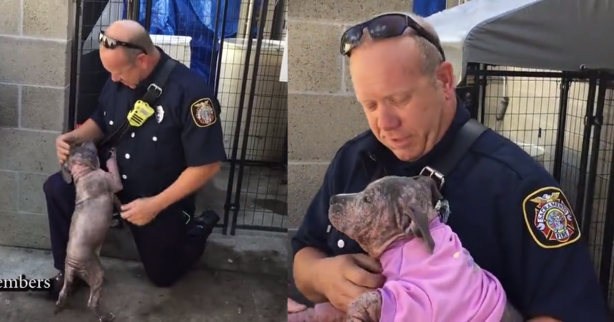 https://rumble.com/v324ax-puppy-is-reunited-with-the-firefighter-who-saved-her-from-abuse.html