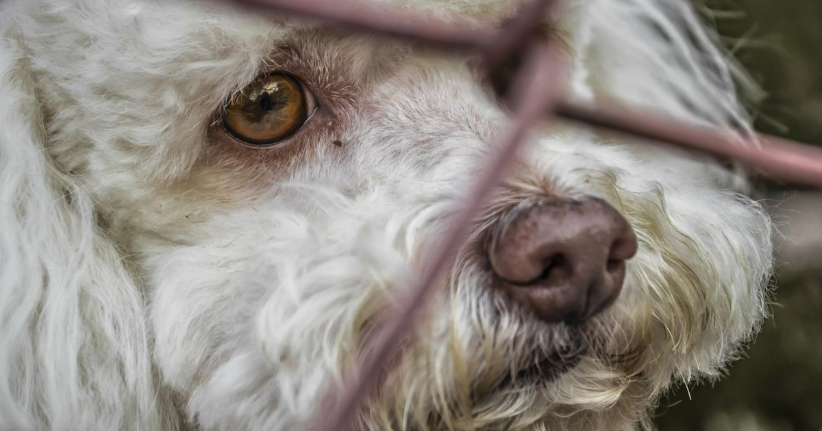 Scotland ups the punishment for animal abuse and cruelty to 5 years in prison