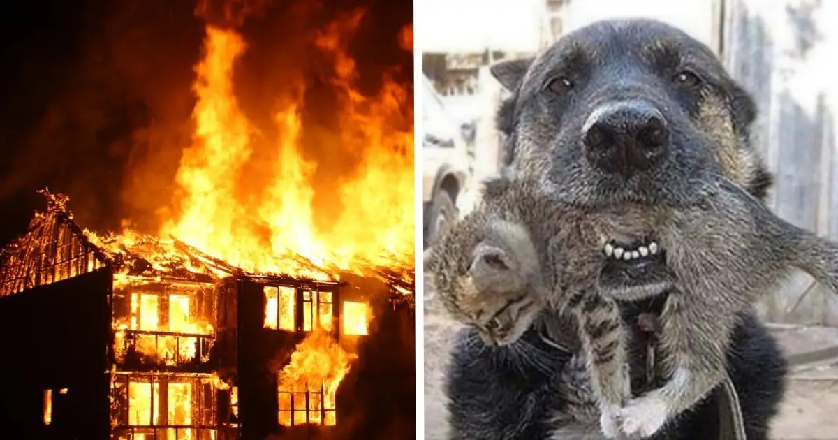 https://thewildchild.co.za/dog-braved-through-a-burning-house-to-rescue-his-little-kitten-friend/