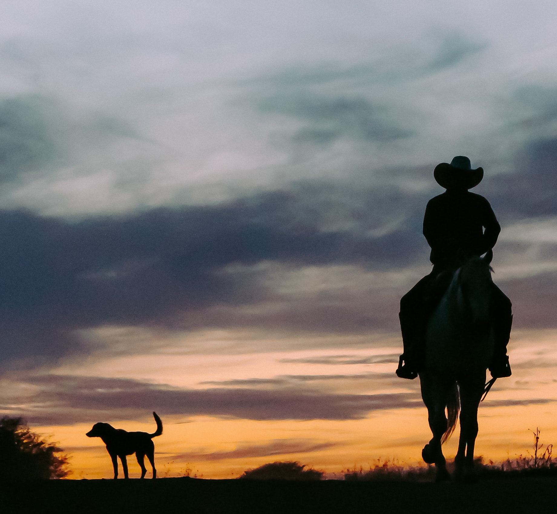 https://www.pexels.com/photo/silhouette-of-person-riding-horse-2618372/